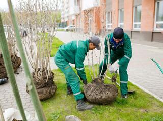В «Образцово» провели масштабное озеленение территории