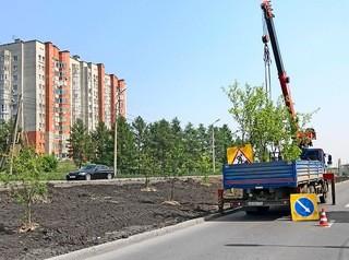 На месте снесенных тополей на улице Стасовой появились новые деревья