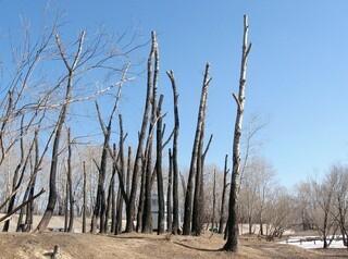 Варварскую обрезку деревьев списали на частные компании и предложили потерпеть
