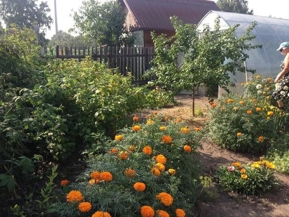 Продам дом, 50 м², Омск. Фото 23.